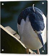 Thoughtful Bird Acrylic Print