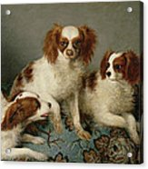 Three Cavalier King Charles Spaniels On A Rug Acrylic Print