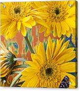 Three Daisy's And Butterfly Acrylic Print
