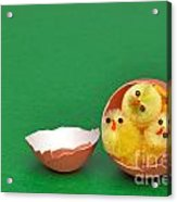 Three Easter Chicks In An Egg Shell Acrylic Print