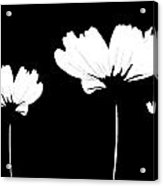 Three Feeling White Acrylic Print