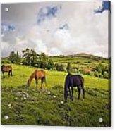 Three Horses Grazing In Field Acrylic Print
