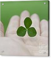 Three Leaf Clover Acrylic Print