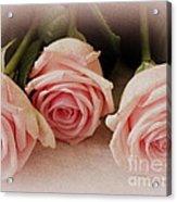 Three Pink Roses Acrylic Print