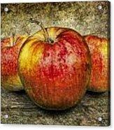 Three Red Apples Acrylic Print