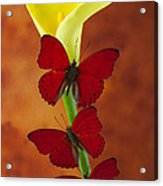 Three Red Butterflies On Calla Lily Acrylic Print