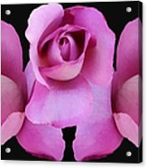 Three Roses Painterly Acrylic Print