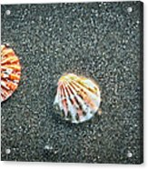 Three Sea Shells Acrylic Print