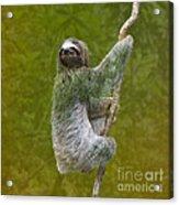 Three-toed Sloth Climbing Acrylic Print by Heiko Koehrer-Wagner