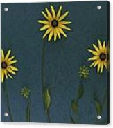 Three Yellow Flowers Acrylic Print