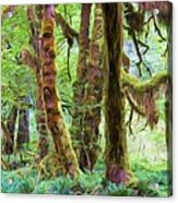 Through Moss Covered Trees Acrylic Print