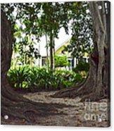Through The Banyans Acrylic Print
