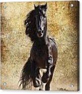 Thundering Stallion Acrylic Print