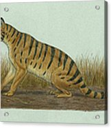 Thylacosmilus Atrox, A Genus Acrylic Print