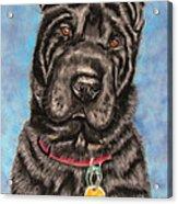 Tia Shar Pei Dog Painting Acrylic Print