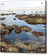 Tide Pools Acrylic Print