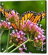 Tiffany Wings And Flowers Acrylic Print