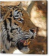 Tiger De Acrylic Print by Ernie Echols