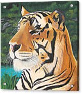 Tiger Falls Acrylic Print