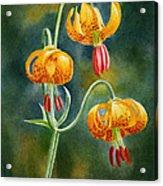 Tiger Lilies #3 Acrylic Print