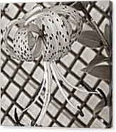 Tiger Lily And Rusty Gate Acrylic Print