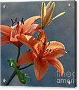 Tiger Lily Splendor Acrylic Print
