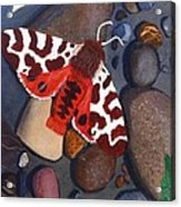 Tiger Moth On River Rocks Acrylic Print by Amy Reisland-Speer