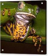 Tiger-stripe Monkey Frog Acrylic Print