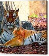 Tiger Stripes Acrylic Print