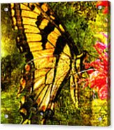 Tiger Swallowtail Butterfly Happily Feeds Acrylic Print