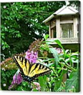 Tiger Swallowtail By The Bird Feeder  Acrylic Print