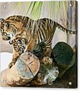Tigers Playing Acrylic Print
