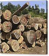 Timber At A Logging Area, Danum Valley Acrylic Print