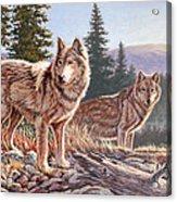 Timber Ridge Acrylic Print
