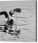 Time For Sushi In Black And White Acrylic Print