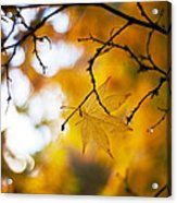 Time Of The Season Acrylic Print