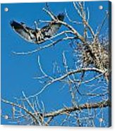 Time To Nest Acrylic Print