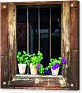 Time Worn Window With Bright Flowers Acrylic Print