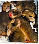 Tiny Bunnies Acrylic Print