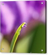 Tiny Drop Of Purple Acrylic Print