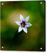 Tiny Flower Acrylic Print