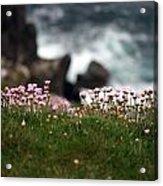 Tiny Pink Flowers Acrylic Print