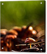 Tiny Shrooms Acrylic Print