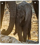 Tiny Trunk Acrylic Print