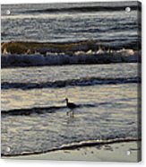 Tip Toeing In The Waves Acrylic Print