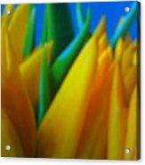 Tiptoe Thru Tulips Acrylic Print