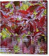 Tn Fall Water Acrylic Print