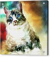 Toby The Cat Acrylic Print