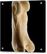 Toe Bone Of A Bobcat Lynx Rufus Acrylic Print by Raul Gonzalez Perez