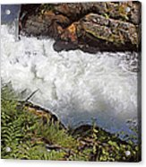 Tongass National Forest Acrylic Print